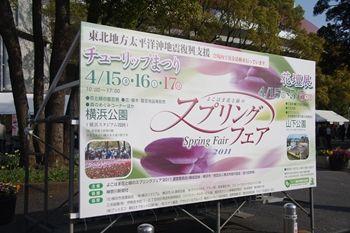 横浜関内にある横浜公園のチューリップまつり