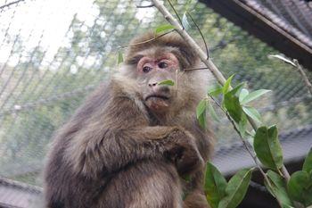 横浜市旭区にある動物園「ズーラシア」のサル