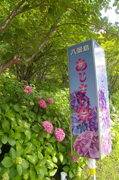 横浜八景島シーパラダイスのあじさい祭