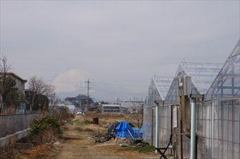 湘南いちご狩りセンターのなんちゃんいちご園のハウス
