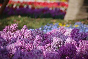 横浜関内にある横浜公園の花