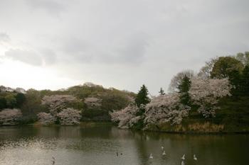 県立三ツ池公園の園内