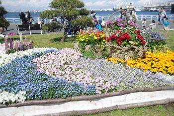 横浜山下公園で開催中の花壇展