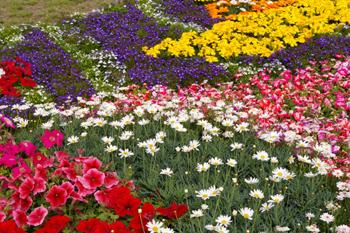横浜山下公園に咲く花