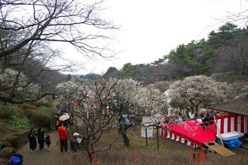 横浜大倉山の観梅会