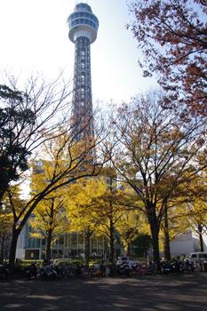 横浜山下公園前の銀杏並木と横浜マリンタワー