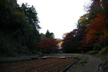 北鎌倉「明月院」の紅葉2