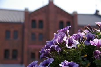 フラワーガーデン in 横浜赤レンガ倉庫の風景