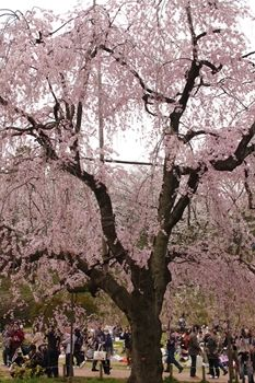 横浜鶴見にある県立三ツ池公園の風景