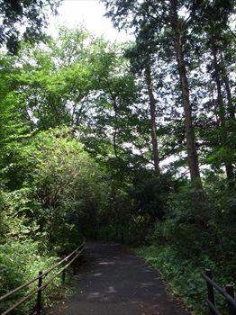 横浜市旭区にある渓谷「陣ヶ下渓谷公園」