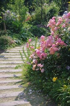 横浜イングリッシュガーデンの花