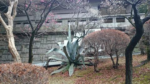 静嘉堂文庫美術館 庭園のアロエ
