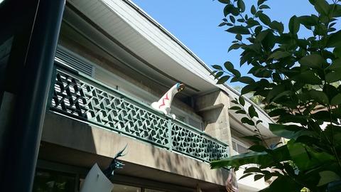 岡本太郎記念館 巨大 コップのフチの太陽の塔