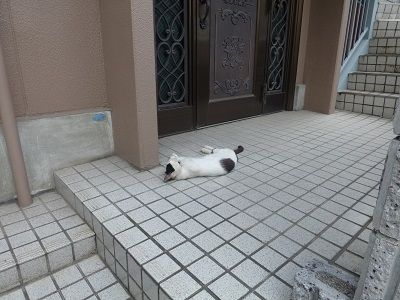 173 寝ている猫