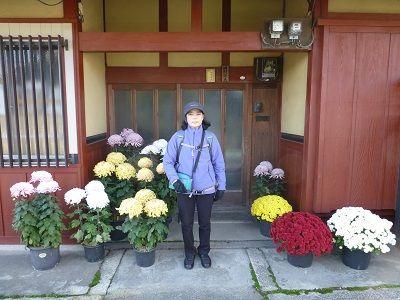 050 満開の菊