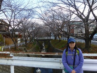 145 桜並木(一里山橋)