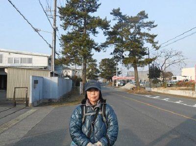 13 松並木(掛川)