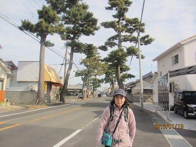 40 瀬戸新屋の松並木(歩いてきた方向に向けて)