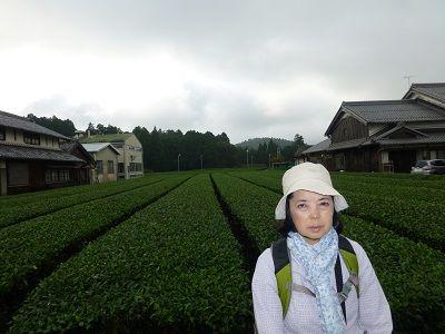 073 土山茶畑