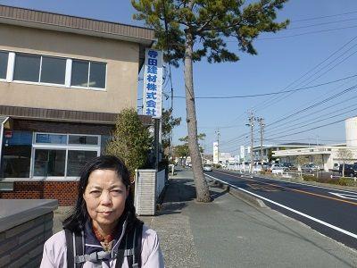 026 東海道の松