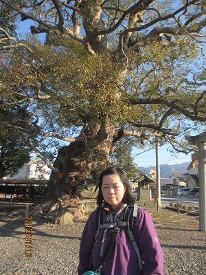 20 大楠木(須賀神社境内)