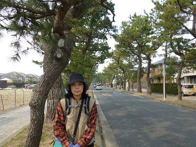 075 舞阪松並木