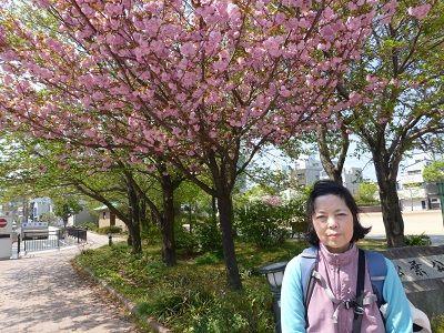 058 松葉公園・八重桜