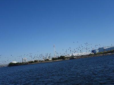 023 渡し④・鳥の群れ