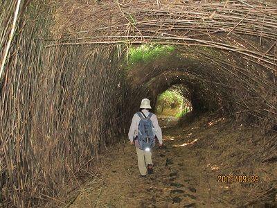 15 甲石坂③(やぶトンネル)