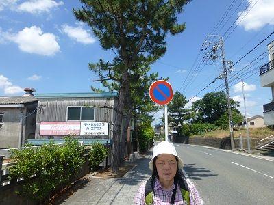 106 左京山松並木