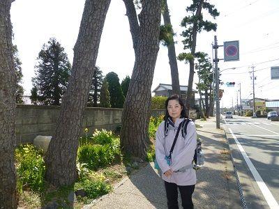 092 東海道の松並木