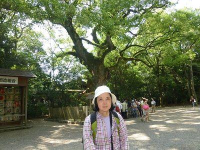 197 大楠の木