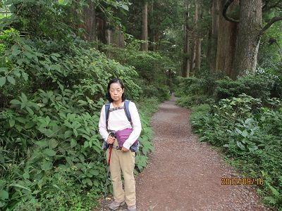 35 箱根杉並木①