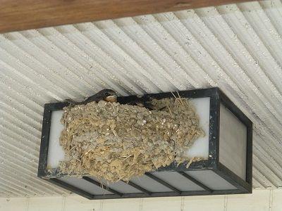 062 つばめの巣