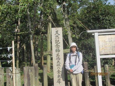 45 三島神社⑤(金木犀)