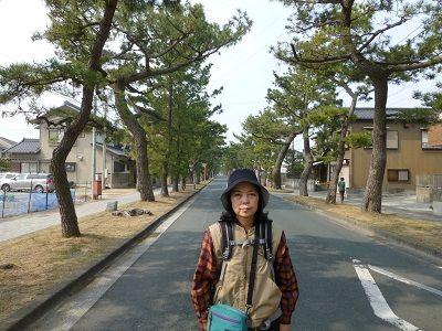 080 東海道・舞阪松並木