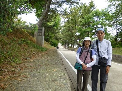 129 藤川松並木