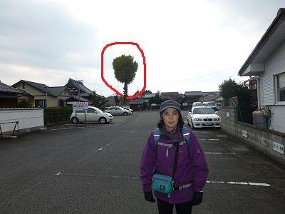 041 心光寺の大きな木