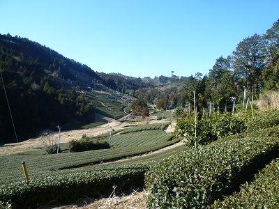 30 箭置坂からの眺め(茶畑)