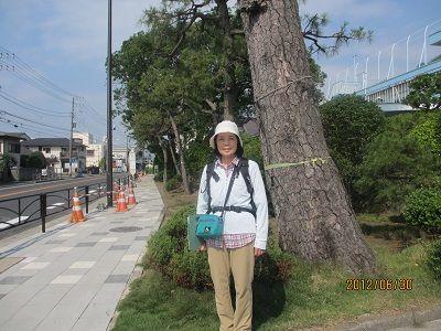 04 二宮の松並木