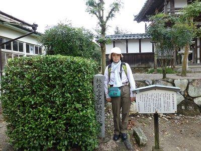 077 林丘寺宮植栽の茶