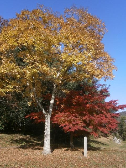 名古曽の滝4