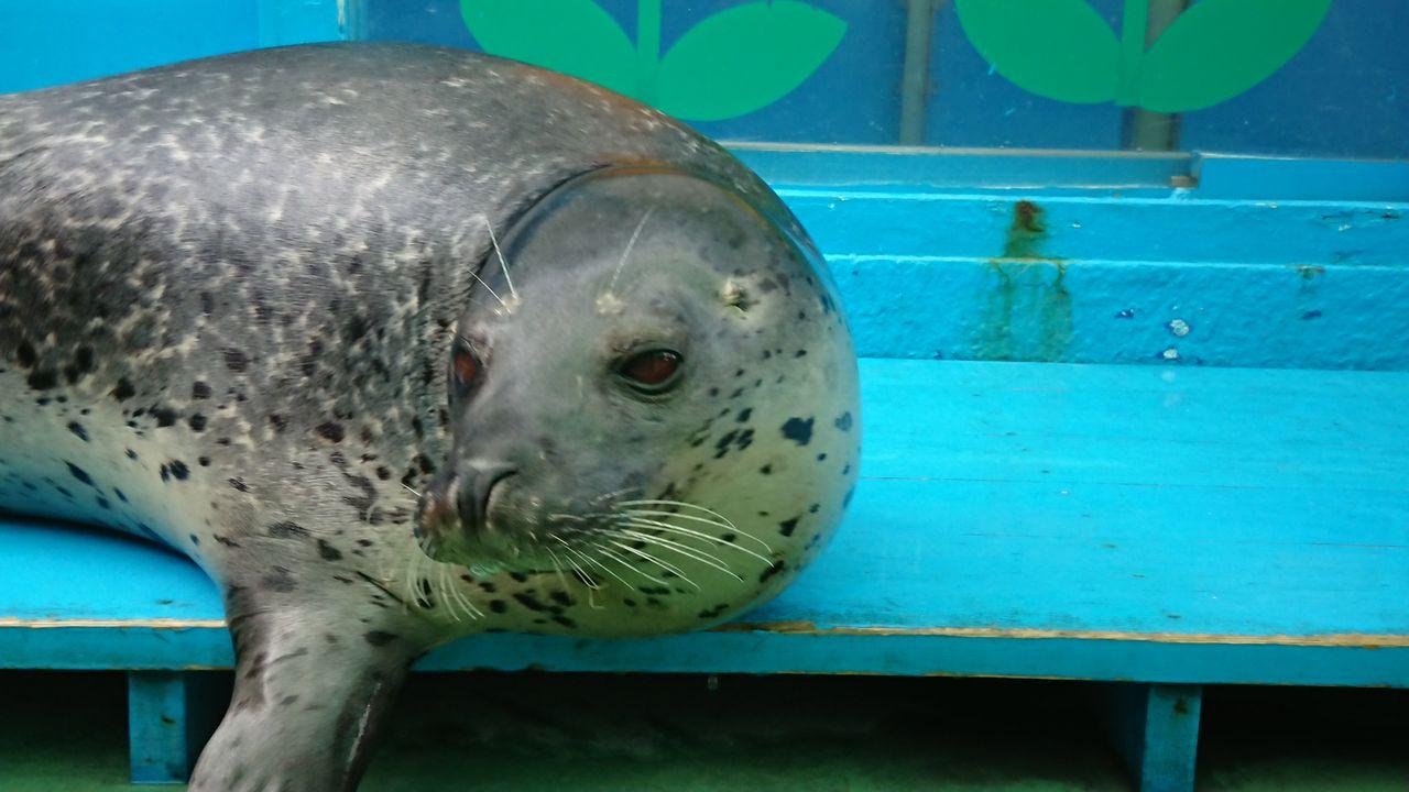 京都発 マリーンズ、沖縄、ロックンロール、なblog : 100点満点、hisの