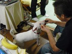 2011_0619_134934-CIMG2433