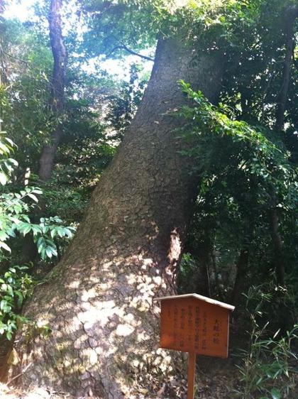 自然教育園14