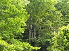 新緑(雌滝への道程)