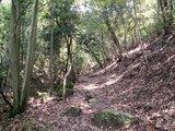 11登山道