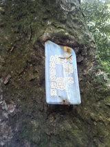 10看板を食べる木