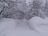 ツリートンネル雪
