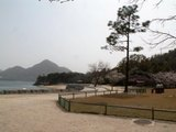 海岸と桜と灯台